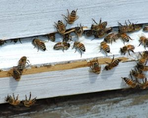 Bee Removals