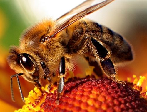 Controlling Bees in the House
