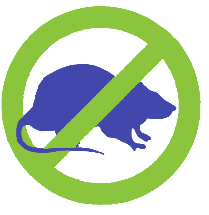 Roof Rats in Arizona and the importance of controlling them