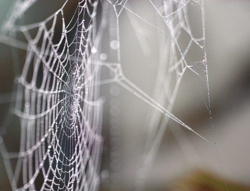 Spiders – Best Friends Or Pest?