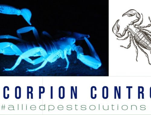 7 Interesting Facts About Scorpions