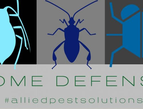 Most Effective Ways To Keep Bugs Out Of Your Home